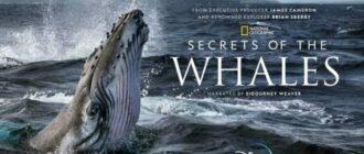 Секреты китов
